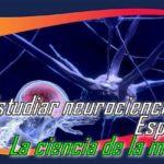 Estudiar neurociencia en España: La ciencia de la mente.