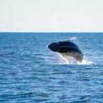 Estudia Esta Interesante Carrera: La Biología Marina